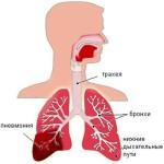 Органы дыхания при пневмонии
