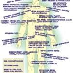 Связь эмоций и внутренних органов