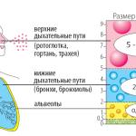 Схема работы ингаляторов при приступе астмы