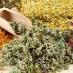 Прием лекарственных сборов трав при астме во время беременности