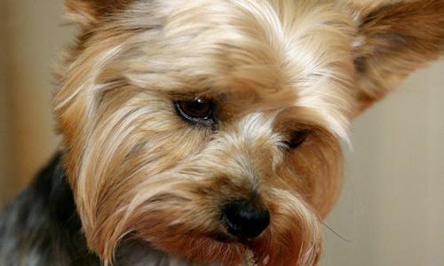 Проблема отека легких у собак