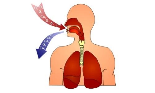 Процесс дыхания