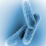Микобактерия - возбудитель чахотки