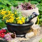 Лечебные травы от пневмонии