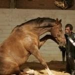 Ринопневмония у лошадей