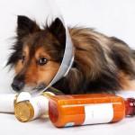 Лечение легких животных медикаментами