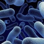 Попадание бактерий  - основная причина бронхита