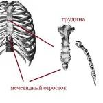 Строение грудины