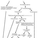 Схема диагностики ТЭЛА