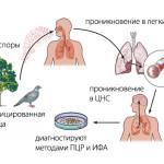 Схема заражения орнитозом