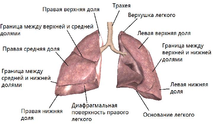 симптомы избавление от паразитов